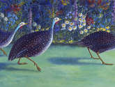 guinea fowl, surprised!