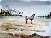 caballo en la costa
