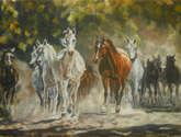 tabun koni arabskich