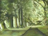 camino, sombra y luz