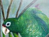 iguaca