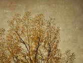 el otoño y las texturas francesas.