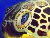 tortuga de carey (detalle)