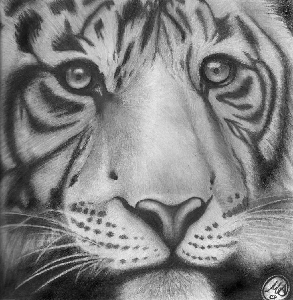 Tigre de Bengala Manuel A. Ceballos- Artelista.com