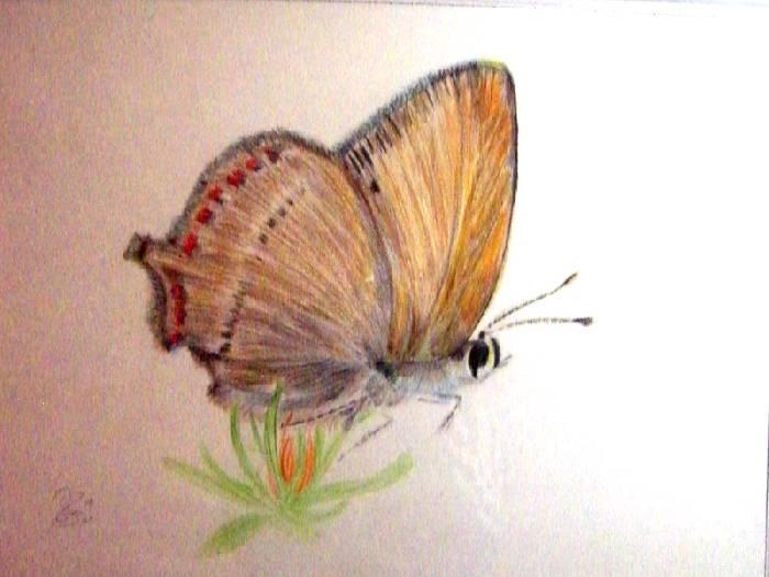 Mariposa 3 Fernando Barreiro Rios Artelistacom