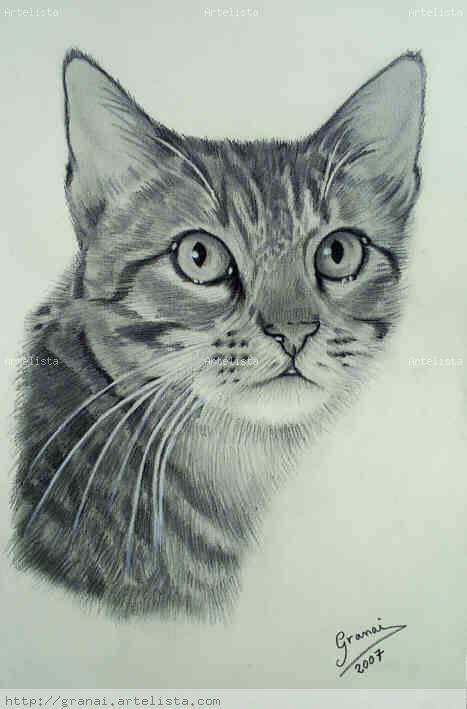 Gatos dibujados a lapiz imagui - Dibujos de gatos pintados ...