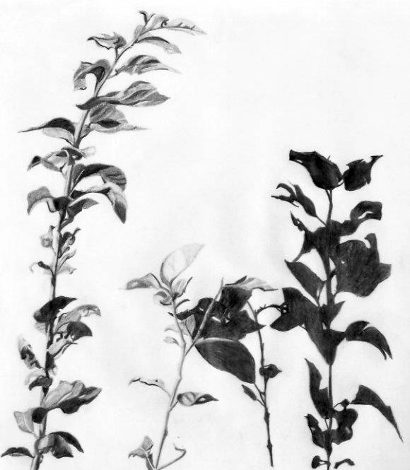 foliaje Rafael Marrn Rangel  Artelistacom