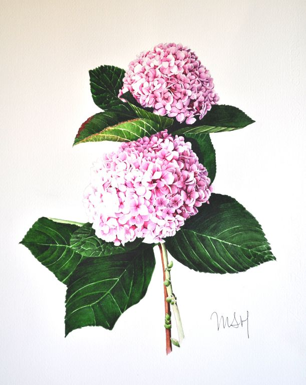 Flor De Mundo Rosa Hortensia Maria Sanchez Hernandez Artelista Com
