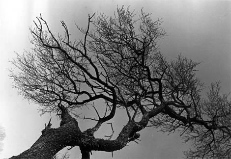 Serie árboles - Ramas 3 Jordi Molas Verdaguer - Artelista.com