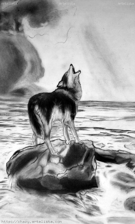 Lobo Dibujo A Lapiz Dibujarte Amino