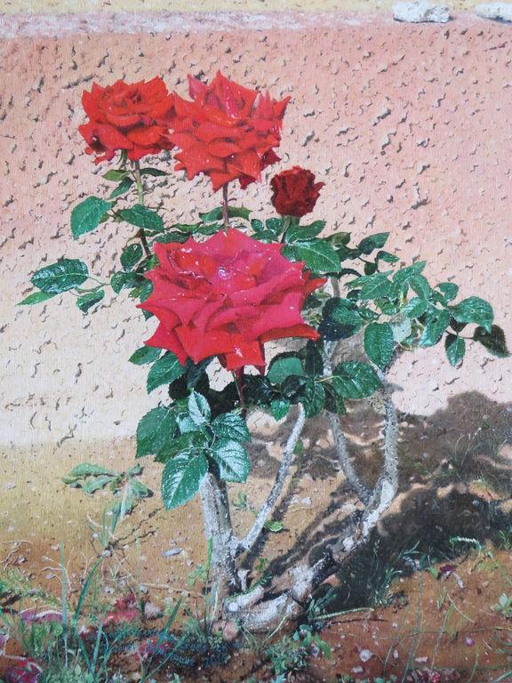 Rosas en el jardín de casa\'\' / \'\'Roses in the home garden ...