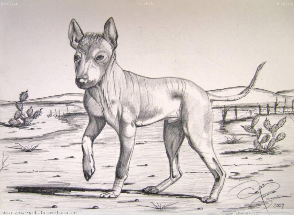 Dibujo Perro Xoloescuincle Related Keywords Suggestions