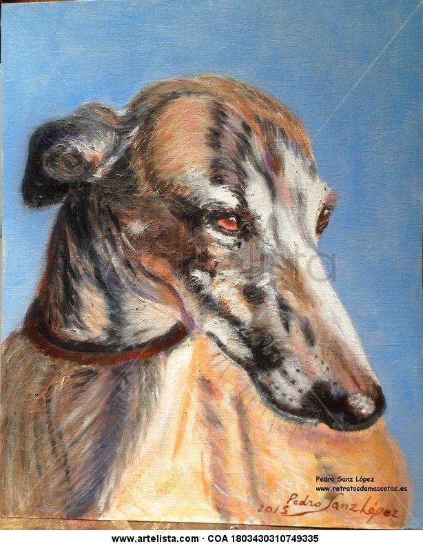 Galgo, cabeza al sol,galgos,perros,mascotas,animales,caza,vintaje ...