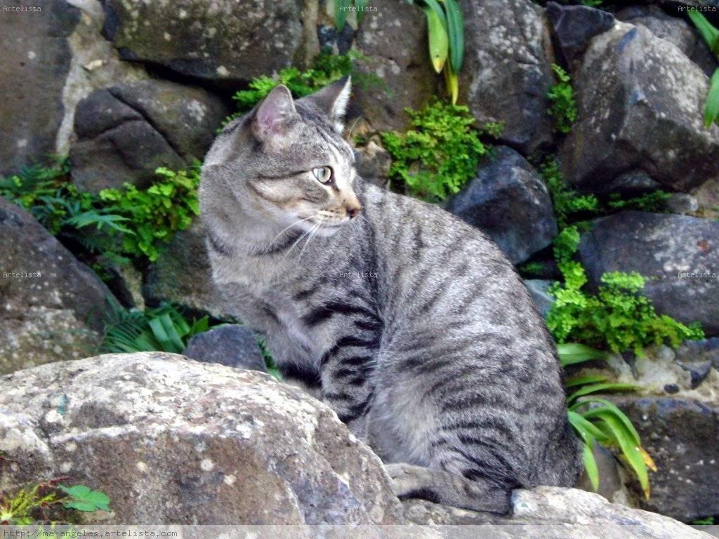 Gato silvestre m angeles rodr guez d az for Ahuyentar gatos del jardin