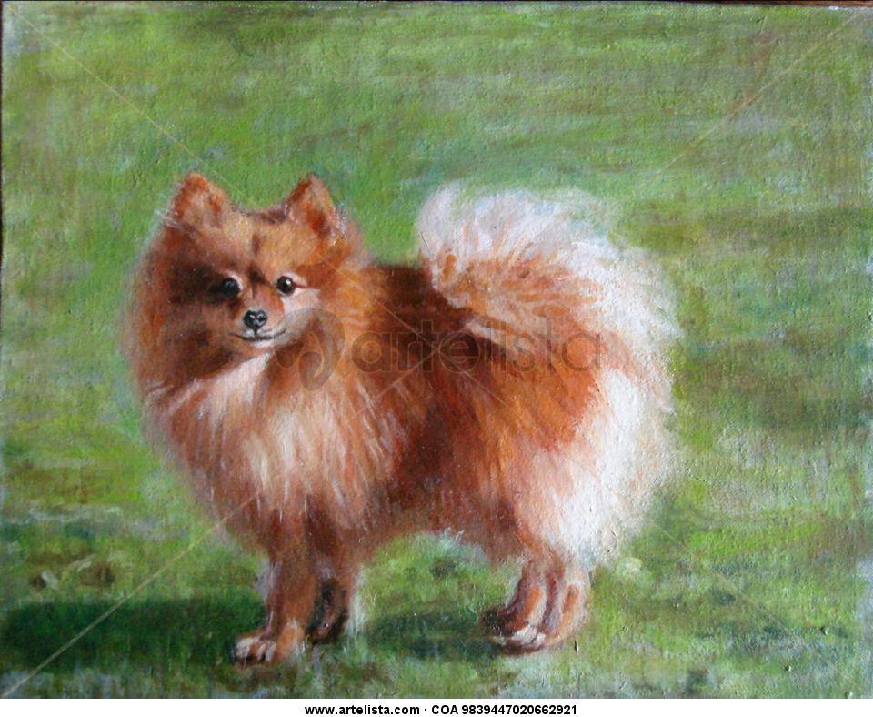 Perro, Pomerania, cuerpo entero,mascotas,peludos,animales,razas,caza ...
