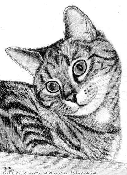 Gato Cat Grunert Andreas Artelistacom