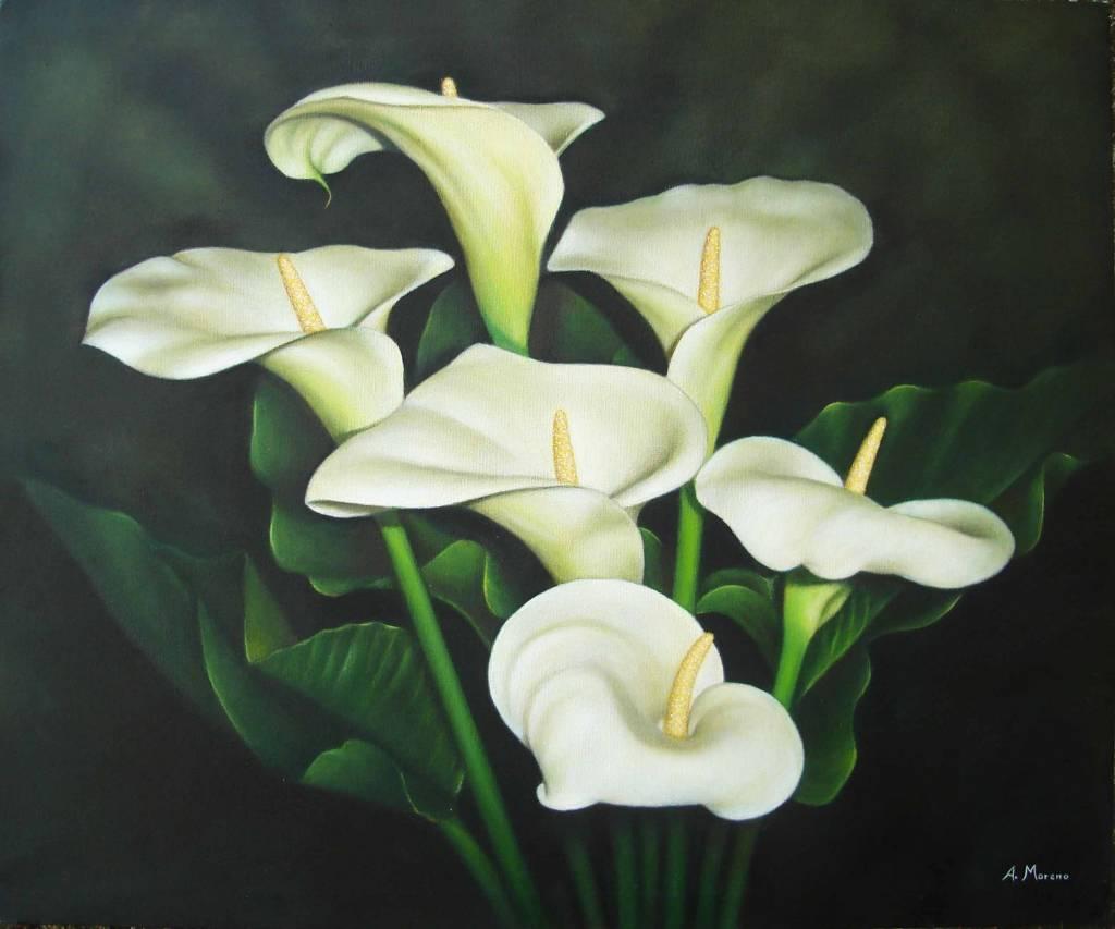 Fotos de flores de calas 96