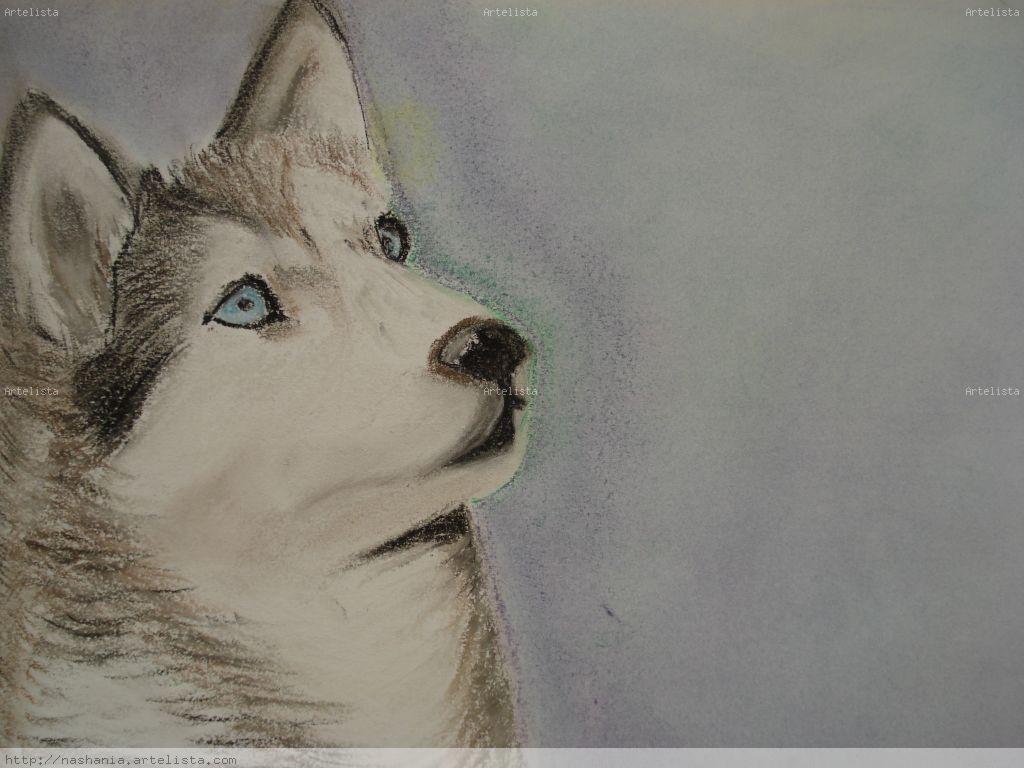 Imagenes de dibujos de husky siberiano para colorear - Imagui