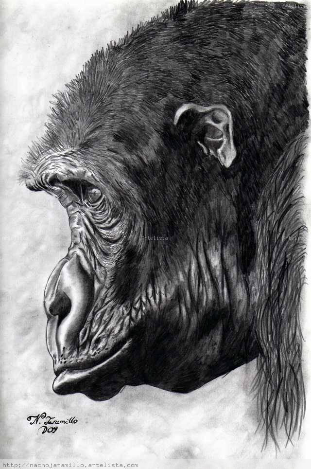 Cabeza de Gorila Ignacio Jaramillo Villar  Artelistacom