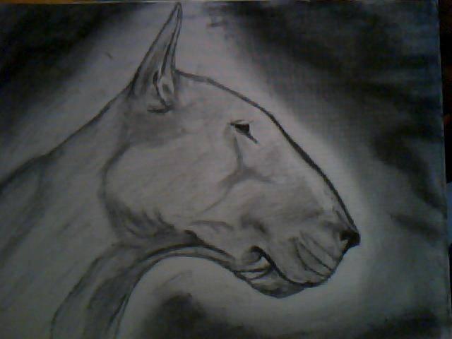 bull terrier ingles RAFAEL RAMIREZ ESCOBAR- Artelista.