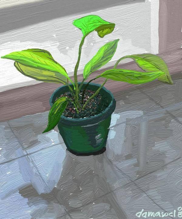 Plantas de balc n damaso armijo pradenas - Plantas de balcon ...