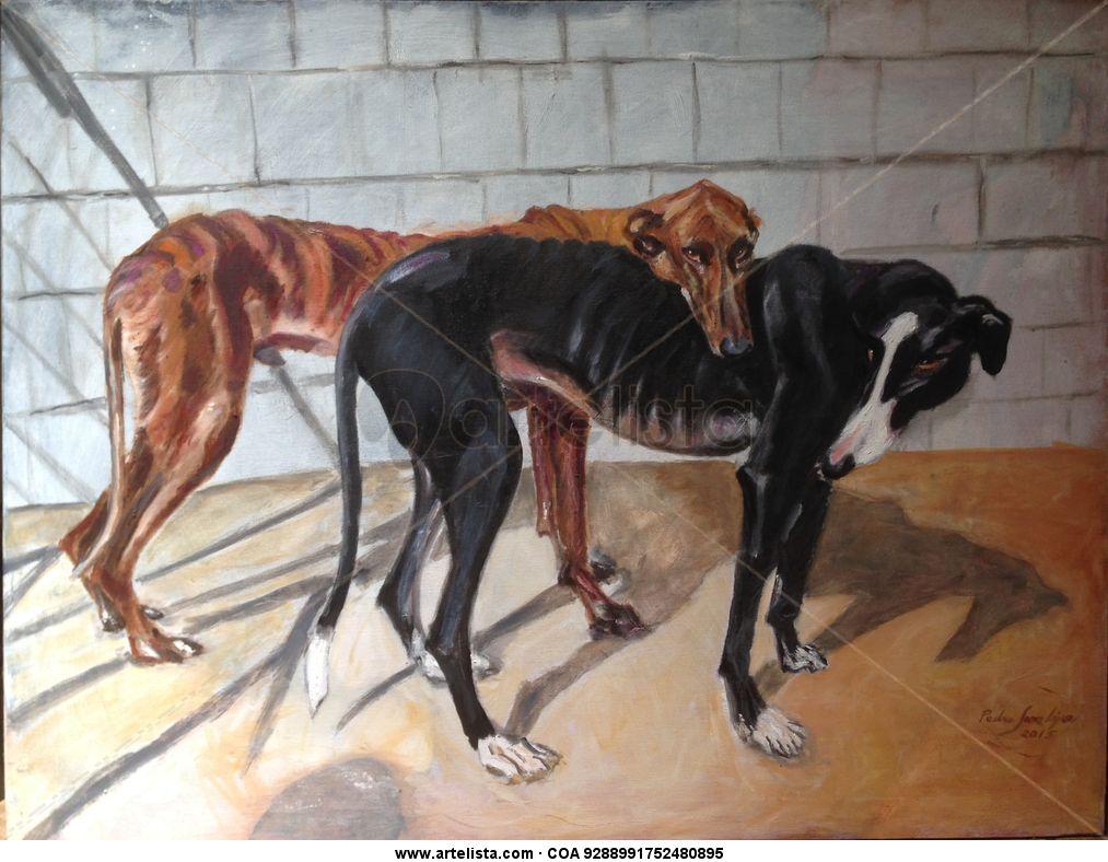 Pareja, de ,galgos,perros,mascotas,animales,peludos,protectoras ...