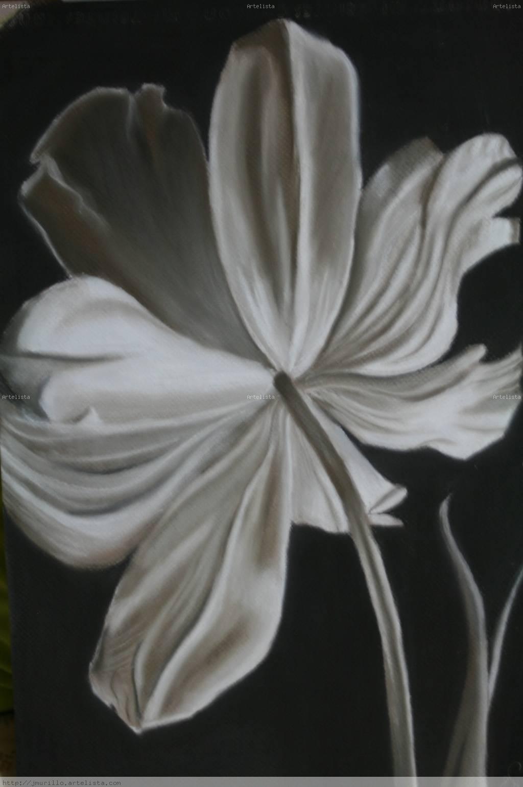 Blanco y negro julio alvarez sanchez for Papel pintado blanco y negro