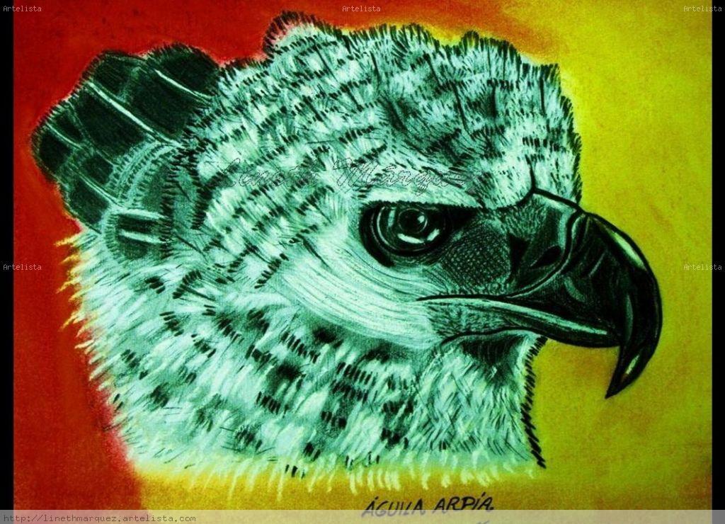 Aguila Arpía de Panamá Lineth Márquez - Artelista.com