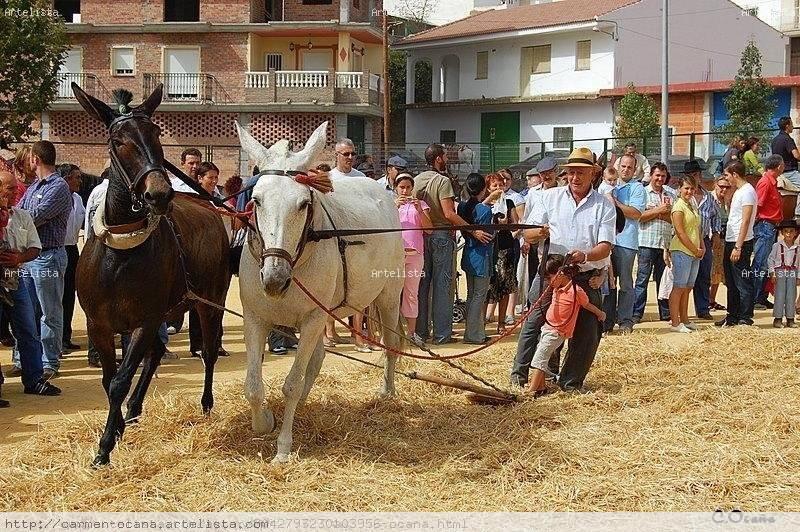 Resultado de imagen de Feria de la mula