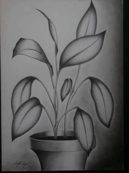 planta Sandy Samuel  Artelistacom