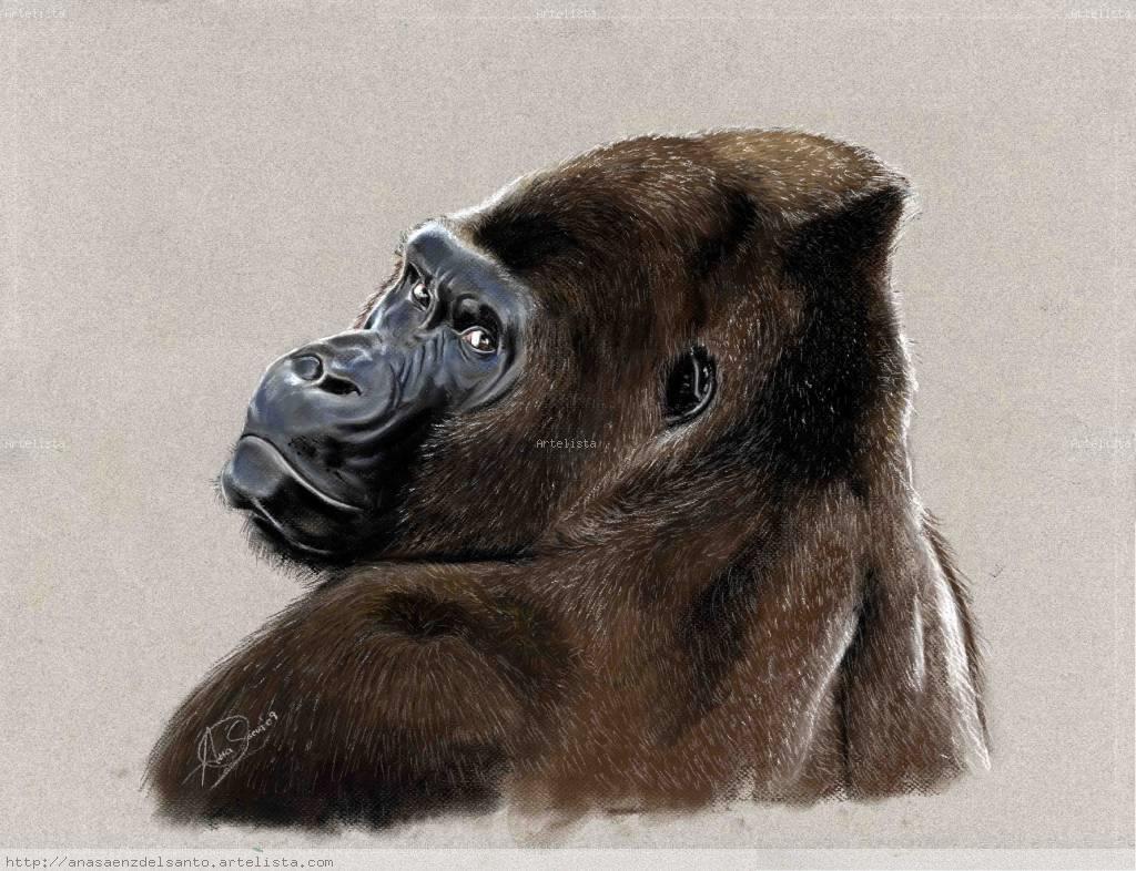 Gorila Ana Sáenz del Santo - Artelista.com
