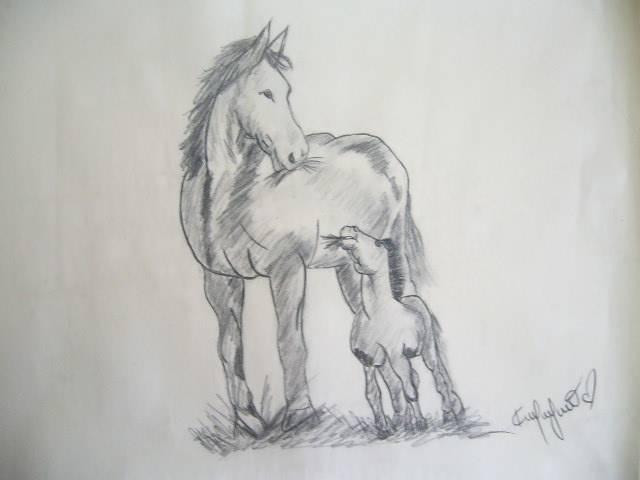Imagenes Para Dibujar A Lapiz Faciles De Caballos