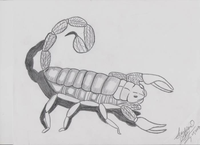 Scorpion Ilsa E Garcia Gonzalez Artelistacom