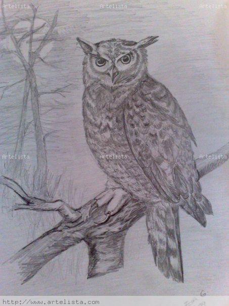 Imagenes de buhos para dibujar a lapiz - Imagui