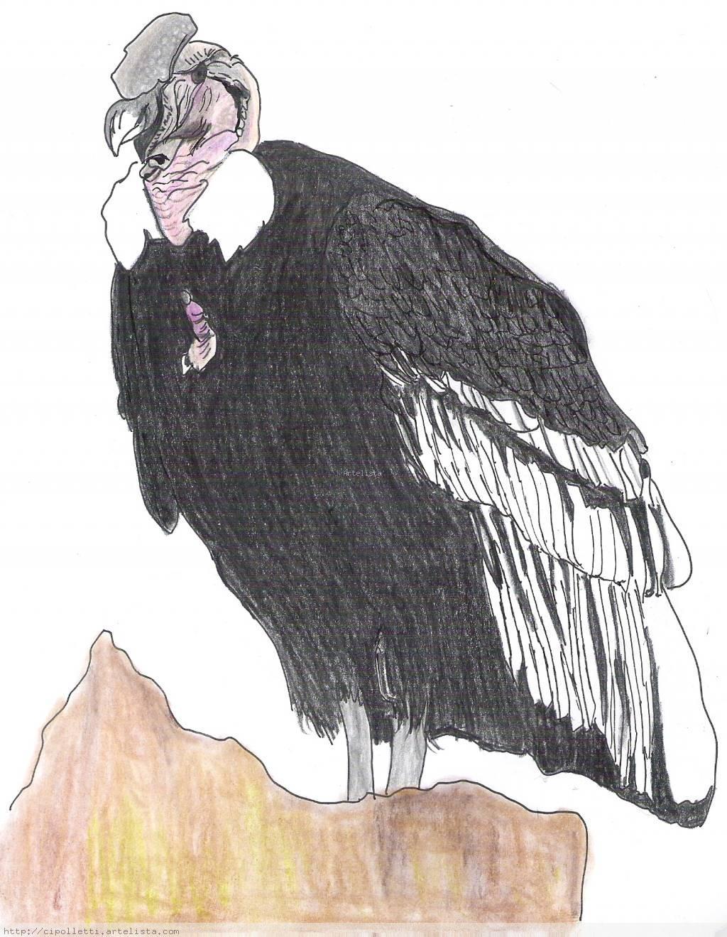 Aves patagonicas condor graciela monica candia for Colores condor