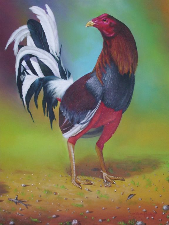 Dibujos de gallos de pelea a lapiz  Imagui