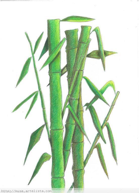 Ca as de bamb marcela muse en for Color bambu pintura