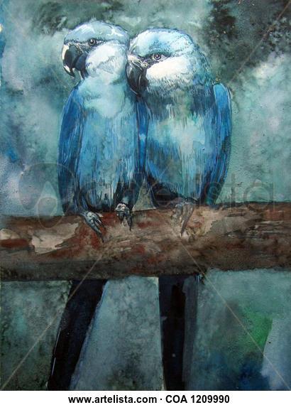 Couple Macaw Animales Acuarela Papel