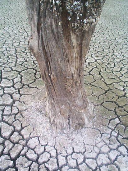la memoria (arbol seco) Naturaleza Blanco y Negro (Digital)