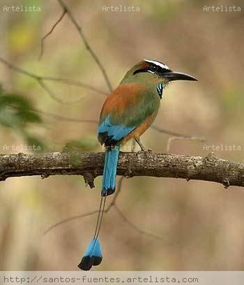ave nacional de nicaragua