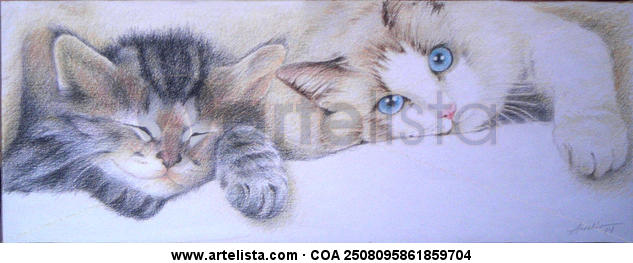gatos Lápiz