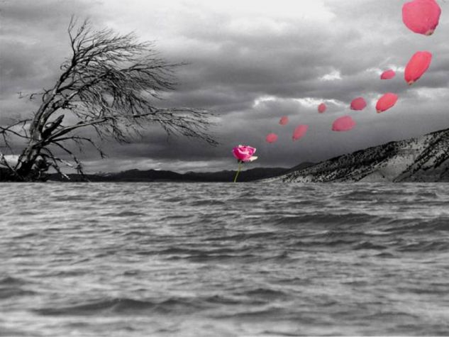 rosa sobre mar inquieto Naturaleza Técnicas alternativas