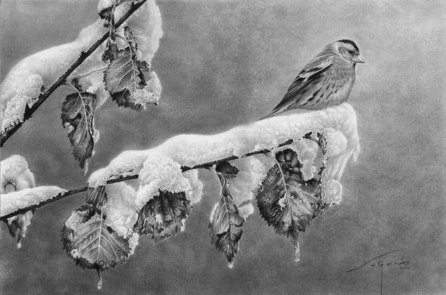 El visitante invernal Grafito Animales Papel