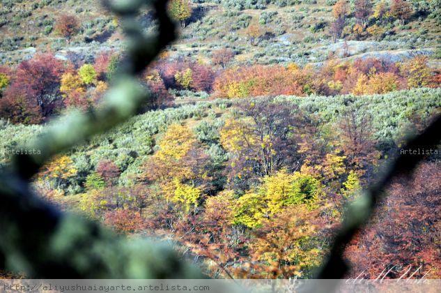 Colores! Naturaleza Color (Digital)