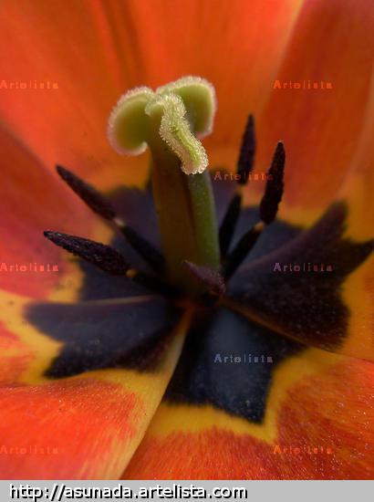 ïntimo Color (Digital) Naturaleza