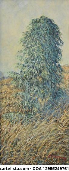 eucalipto en campo de trigo