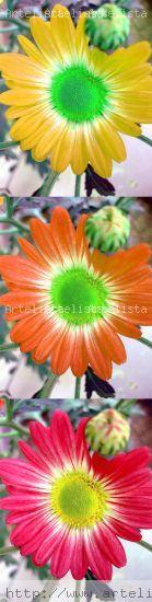 Flores en sintonía 2 Arquitectura e interiorismo Color (Digital)