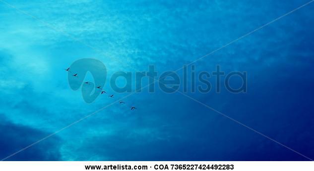 Flamingos en azul Naturaleza Color (Digital)