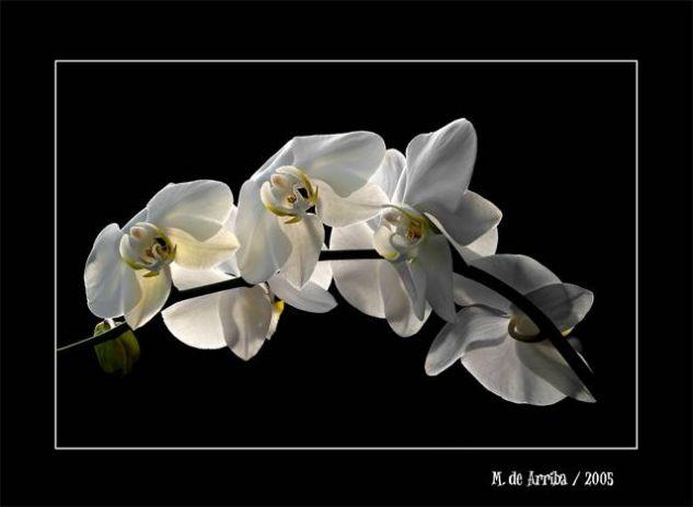 Flores Naturaleza Color (Digital)