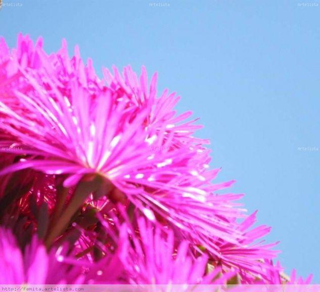 Flor morada Naturaleza Color (Digital)